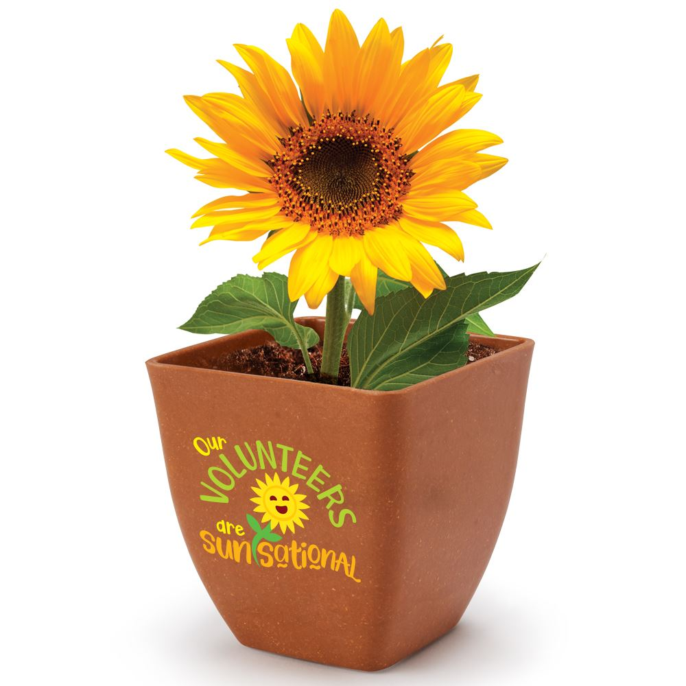 Our Volunteers Are Sun-Sational Bamboo Planter Kit with Sunflowers