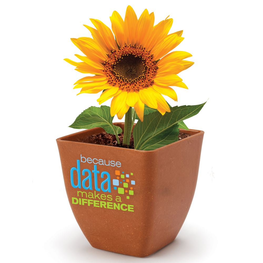 Because Data Makes A Difference Bamboo Planter Kit With Sunflowers