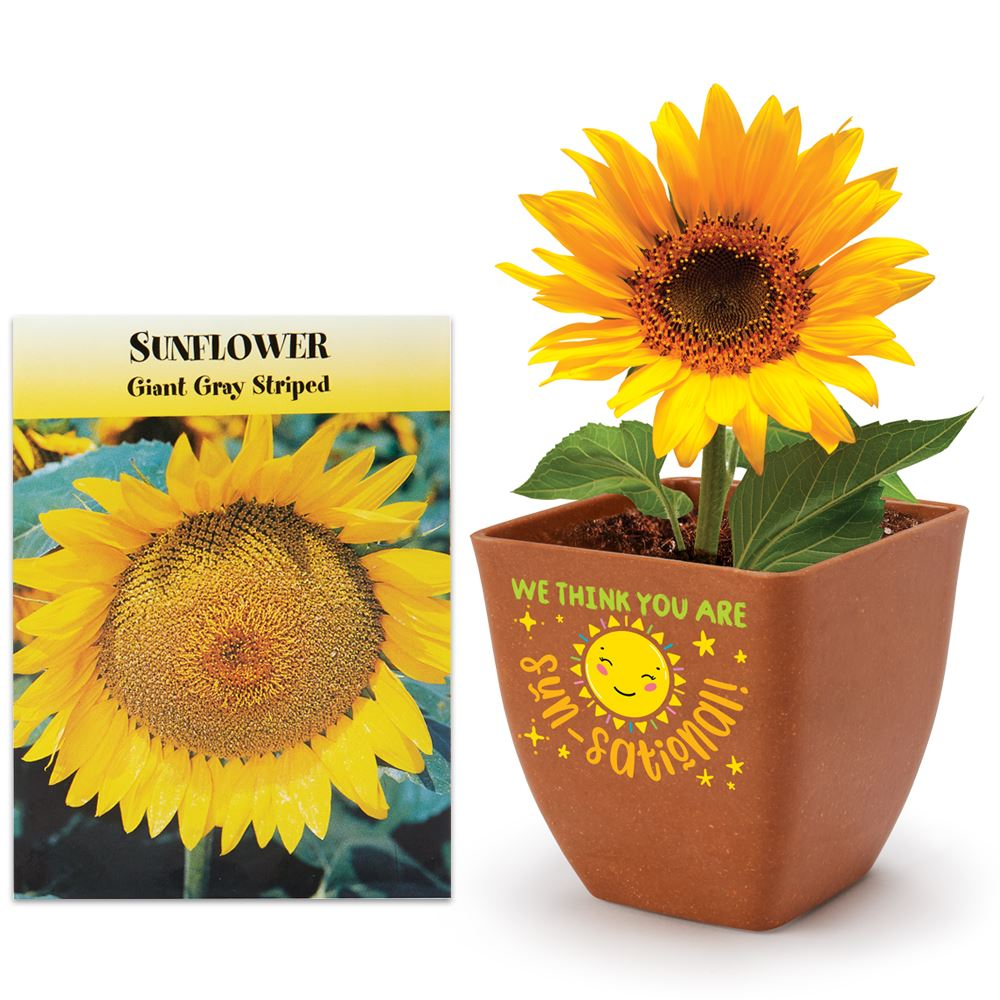 We Think You're Sun-Sational! Bamboo Planter Kit With Sunflower Seeds