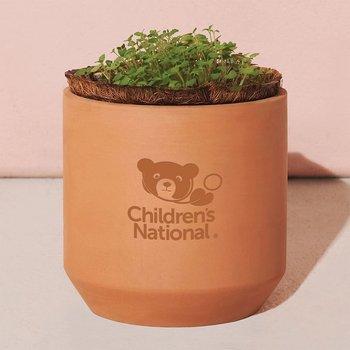 Modern Sprout Tiny Terracotta Grow Kit Thank You Daisies