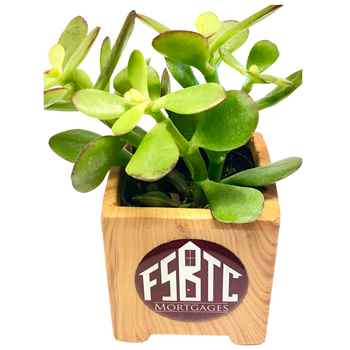 Succulent in Wood Grain Ceramic Pot - Personalization Available